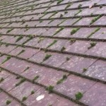 Roof Cleaning and Coating Price